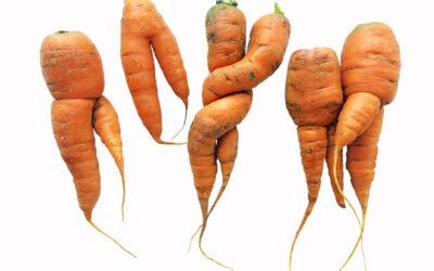 La carotte…ou le bâton !